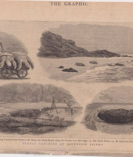 Antique Print, Turtle Catching at Ascension Island, 1883