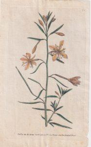 Antique Engraving Print, Botanic Garden, Lambeth Marsh, 1789
