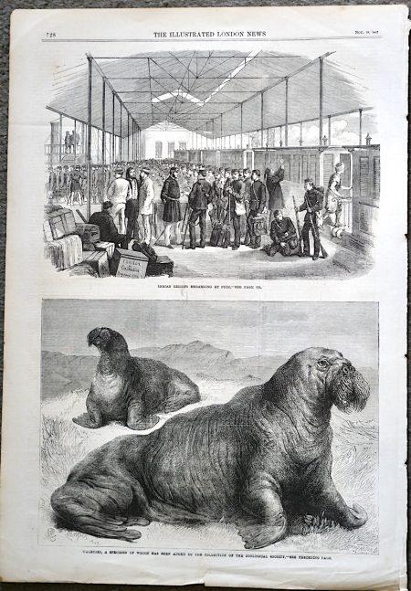 Antique Print, Walruses; Indian Reliefs, 1867