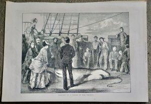 Antique Print, Capture of a Shark in the Tropics, 1872