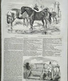 Antique Print, Ponies, 1853