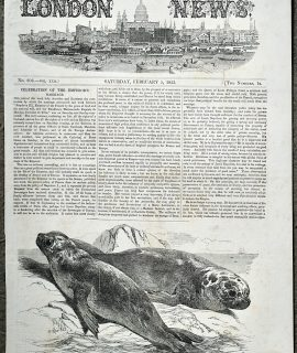 Antique Print, Sea Elephants, 1853