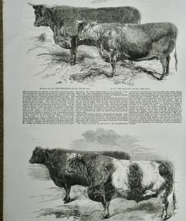 Antique Print, Meeting of the Royal Agricultural Society, 1857