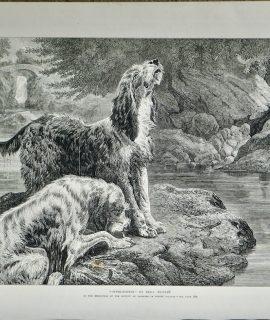 Antique Print, Otter-Hounds, 1872