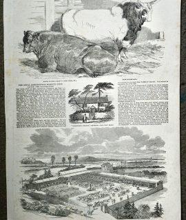 Antique Print, New-cattle market at Croydon, 1851
