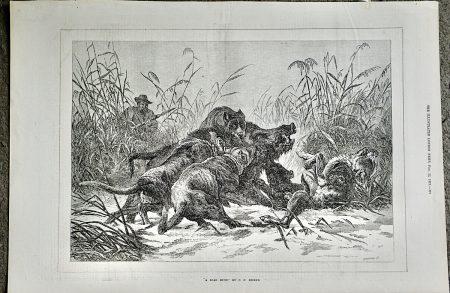 Antique Print, A boar Hunt by C.F. Deiker, 1873