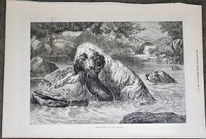 Antique Print, Otter-Hounds, 1873