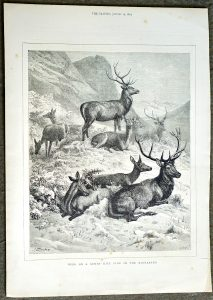 Antique Print, Deer on a SUnny Hill Side in the Highlands, 1872