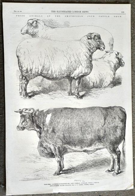 Antique Print, Cattle Show, 1866