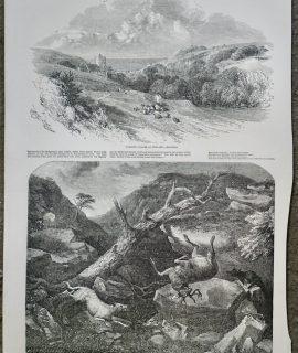 Antique Print, Watering Places; Deer stalking, 1849