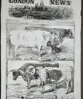 Antique Print, Cattle, 1859