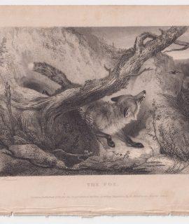 Antique Engraving Print, The Fox, 1833