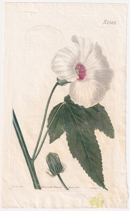 Antique Engraving Print, Weddell Sc., 1823