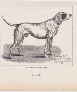 Antique Print, A Favourite Pointer, 1880