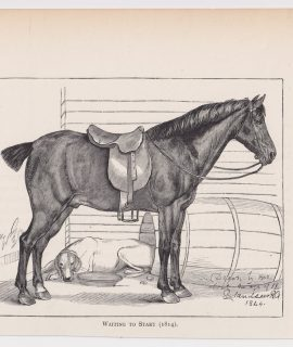 Antique Print, Waiting to Start, 1880