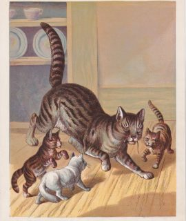 Vintage Print, The cats, 1890