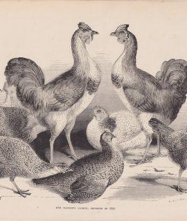 Antique Print, Cochins, 1870 ca.