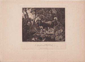 Antique Engraving Print, A Spaniel and Wild Duck, 1858 ca.